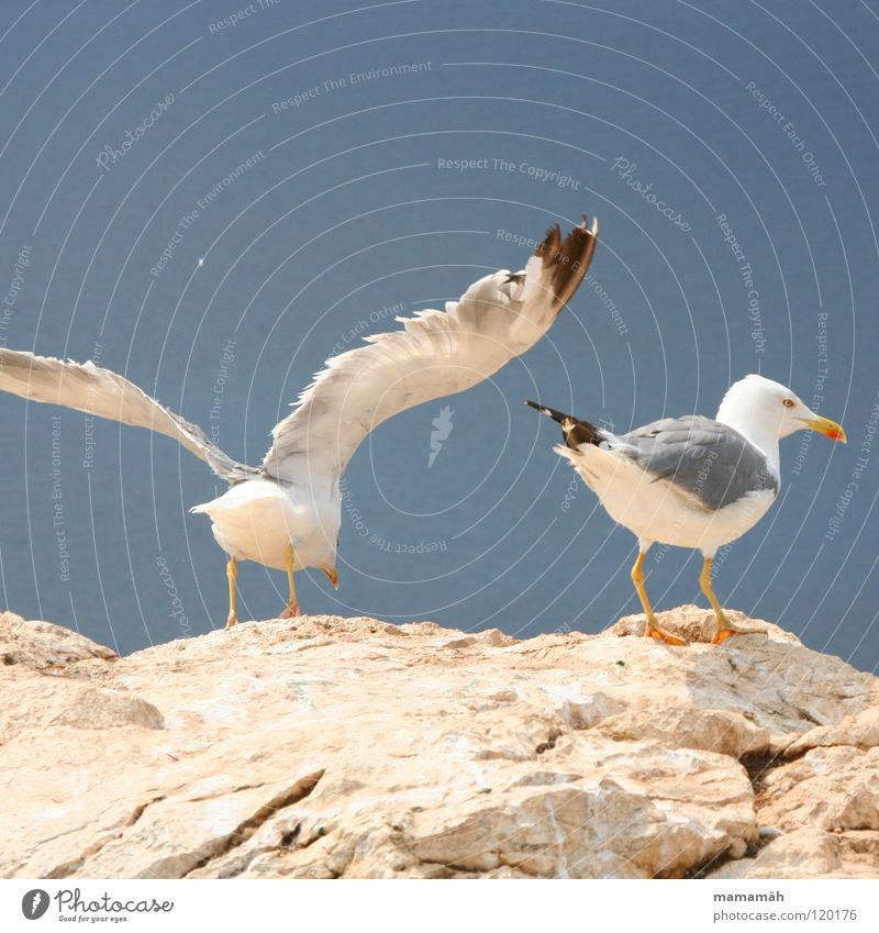 Sky Ocean Mountain Stone Lake Feet Bird Rock Flying Beginning Aviation Stand Feather Wing Seagull Boredom