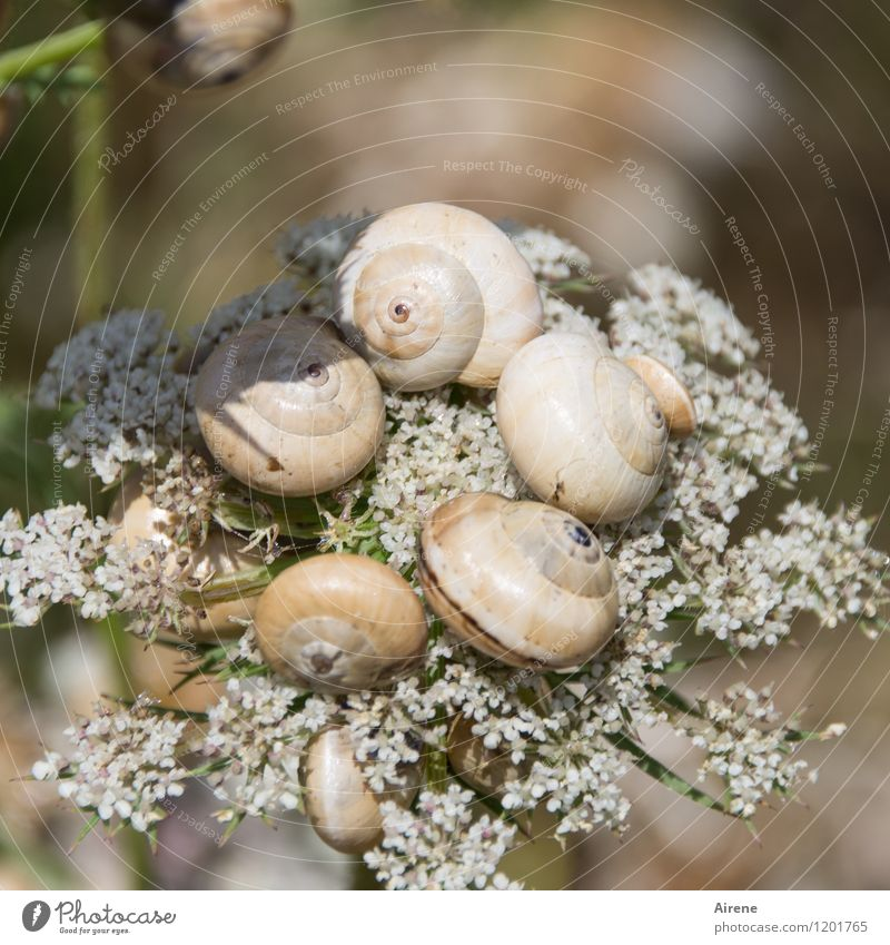 homeowners meeting Plant Flower Animal Snail Group of animals Snail shell Spiral Circle To talk Rotate Crouch Exotic Creepy Funny Brown White Bizarre