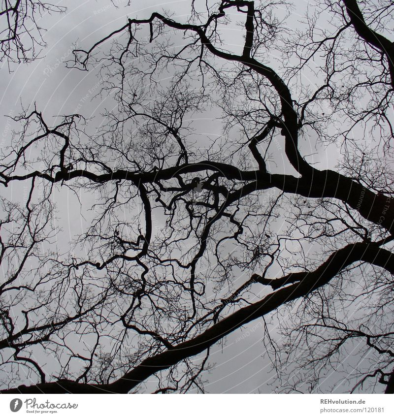 Nature Sky Tree Winter Clouds Dark Gray Sadness Rain Moody Weather Force Branch Strong Vessel November
