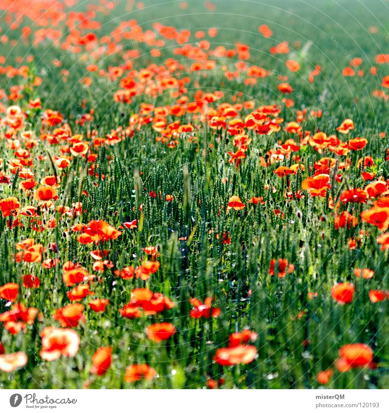 Nature Green Plant Red Colour Meadow Emotions Spring Happy Blossom Healthy Field Flying Food Nutrition Break
