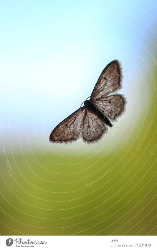 (Borders)los Nature Sky Cloudless sky Window Wild animal Butterfly Wing 1 Animal Flying Sit Natural Hope Wanderlust Moth Pane Colour photo Multicoloured