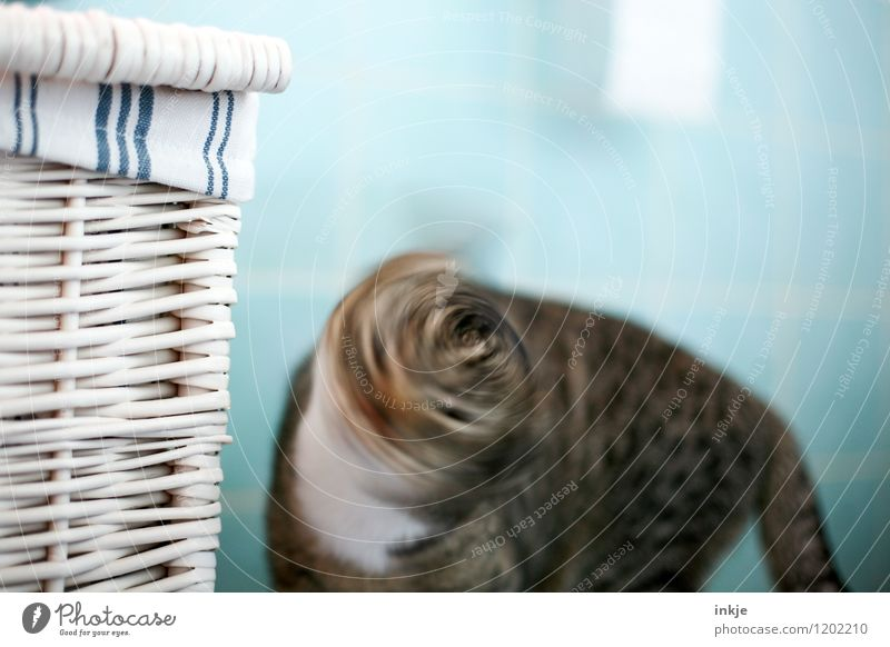 Cat life - spin cycle   dizzy Pet Animal face 1 Movement Disgust Shake of the head Rotate Colour photo Interior shot Close-up Deserted Copy Space left