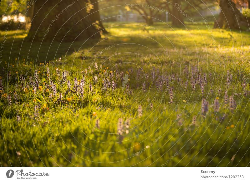 The last rays... | UT Cologne Nature Landscape Plant Sunrise Sunset Sunlight Spring Summer Beautiful weather Tree Flower Grass Bushes Park Meadow Blossoming