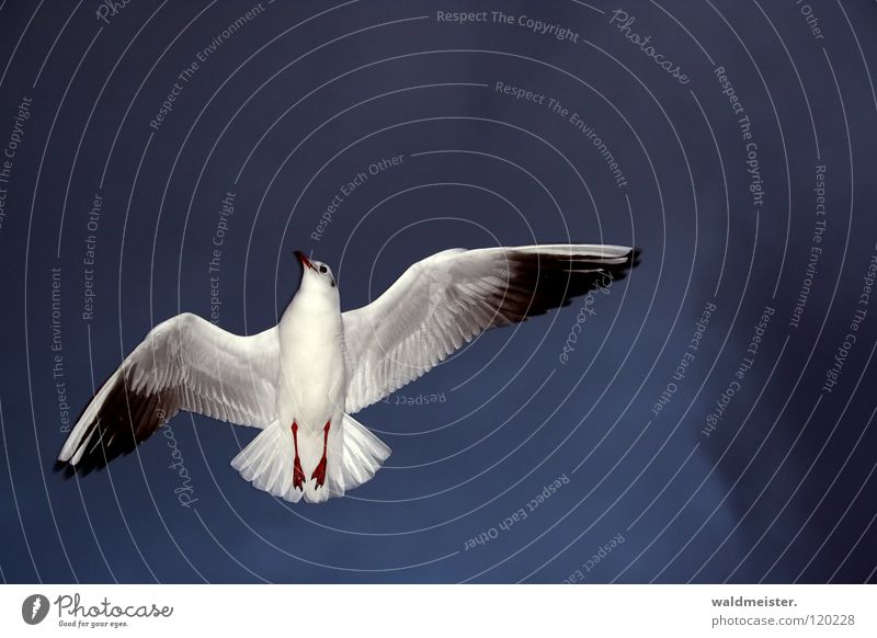 I'll wave goodbye to you Seagull Black-headed gull  Bird Wave Goodbye Grief Direction Ocean Beach Sky Aviation Flying Wing Feather Divide Sadness Indicate