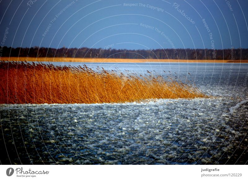 Nature Water Sky Winter Calm Colour Cold Lake Landscape Ice Coast Wind Environment Frozen Common Reed Darss