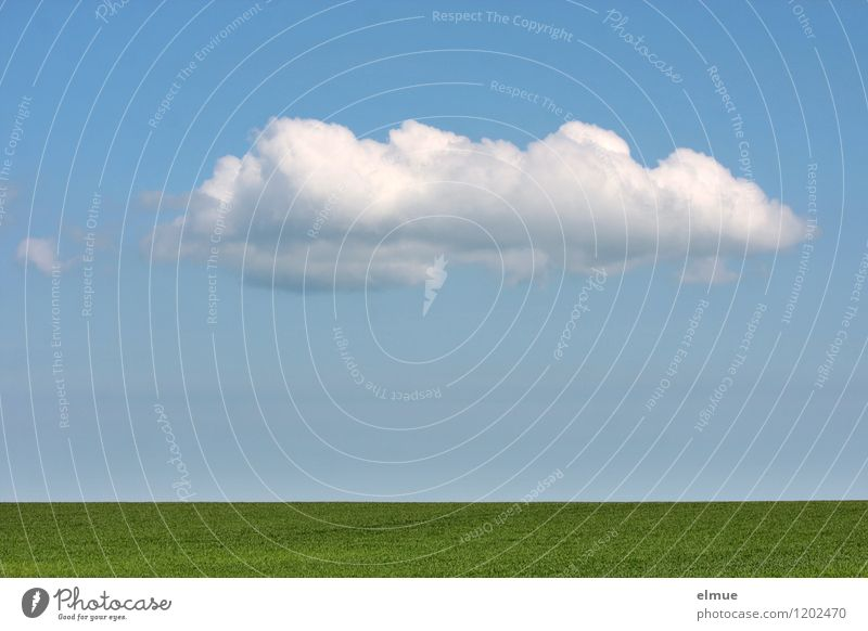 Decorative cloud over green field Environment Nature Landscape Plant Earth Sky Clouds Spring Beautiful weather Agricultural crop Grain field Field Infinity Blue