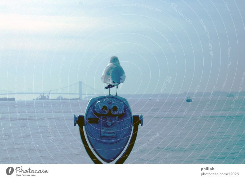 BirdPerspective Binoculars Ocean Seagull Vantage point New York City Photographic technology Style Funny Rear view Full-length Bright background Isolated Image