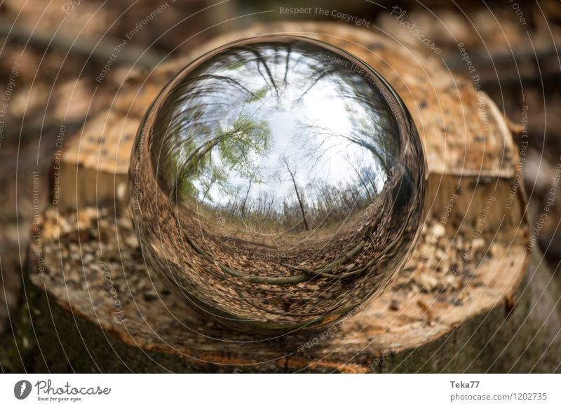 Nature Tree Environment Esthetic Adventure Sphere Climate change Reflection