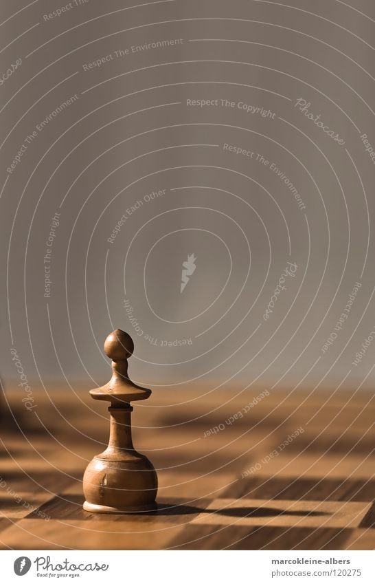 White Loneliness Cold Playing Brown Agriculture Still Life Chessboard Chess piece Bright background