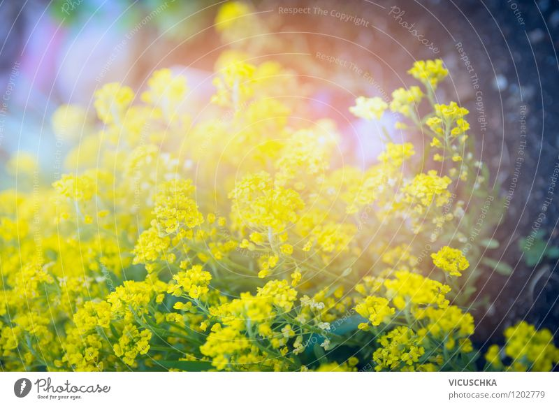 Nature Plant Summer Flower Leaf Yellow Spring Blossom Autumn Style Background picture Garden Lifestyle Park Design Soft