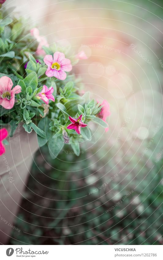 Flowerpot with petunias Style Design Summer Garden Nature Plant Spring Autumn Leaf Blossom Pot plant Park Container Pink Background picture flowers Petunia