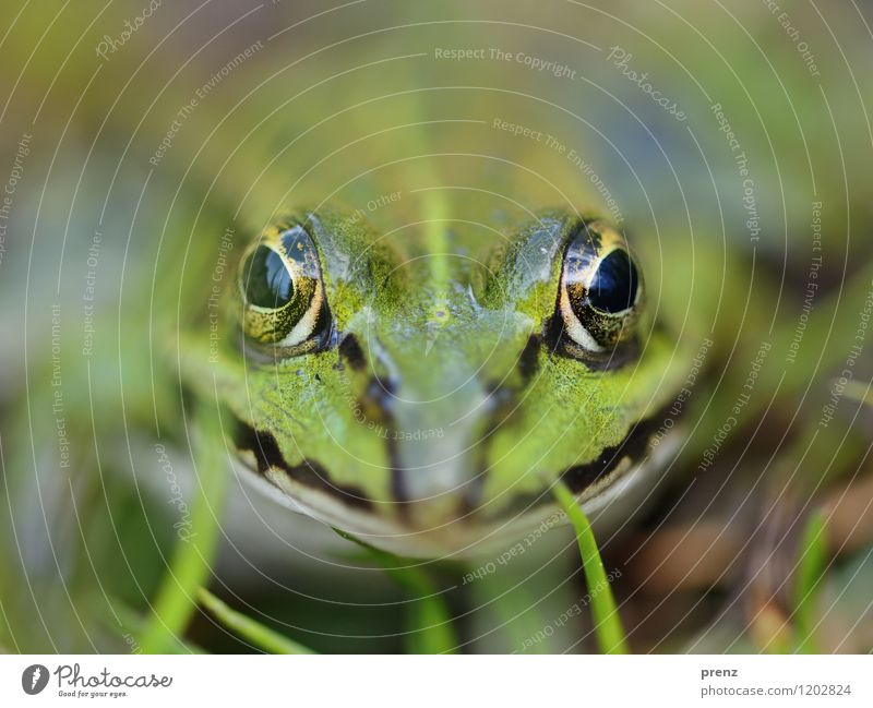 Nature Green Summer Animal Environment Spring Eyes Meadow Grass Wild animal Sit Beautiful weather Animal face Frog