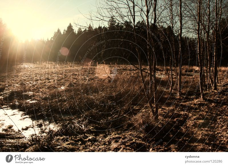 Sky Nature Beautiful Tree Sun Calm Winter Loneliness Forest Cold Life Meadow Dark Snow Landscape Grass