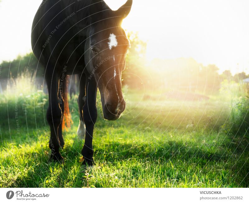 Sunset on green horse pasture Lifestyle Style Design Summer Nature Landscape Plant Animal Solar eclipse Sunrise Sunlight Spring Autumn Beautiful weather Meadow