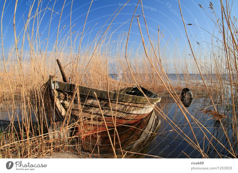 Boat in reed Vacation & Travel Environment Nature Landscape Water Cloudless sky Weather Beautiful weather Coast Baltic Sea Ocean Fishing boat Watercraft Old