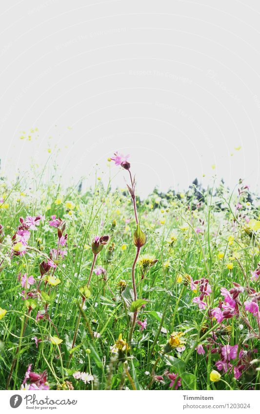 Somewhere in the Allgäu (4). Environment Nature Plant Sky Flower Grass Blossom Meadow Hill Blossoming Growth Yellow Green Violet Emotions