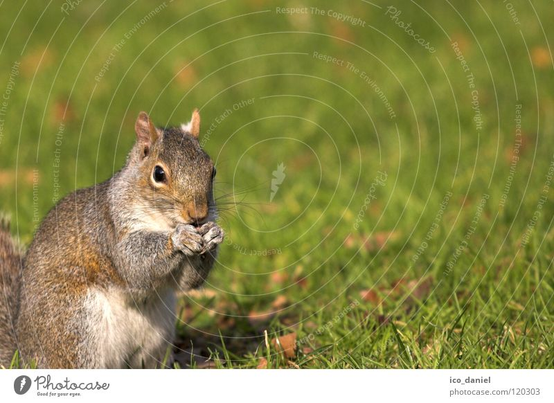 Animal Grass Small Sit Wild animal Break Cute To feed Mammal Feed Squirrel Crouch Obedient