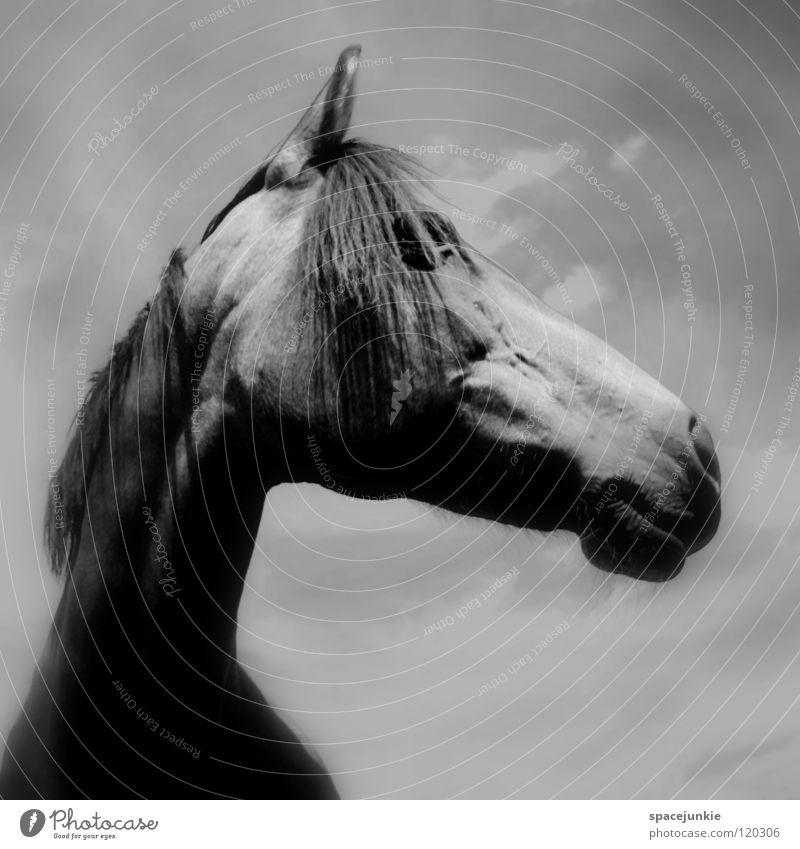 Nature Sky Animal Meadow Grass Elegant Horse Pelt Pasture Mammal Muzzle Mane
