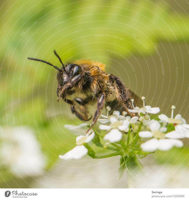 wild bee Environment Nature Plant Animal Air Sun Sunlight Tree Flower Grass Blossom Foliage plant Wild plant Garden Meadow Forest Bee 1 Exotic Colour photo