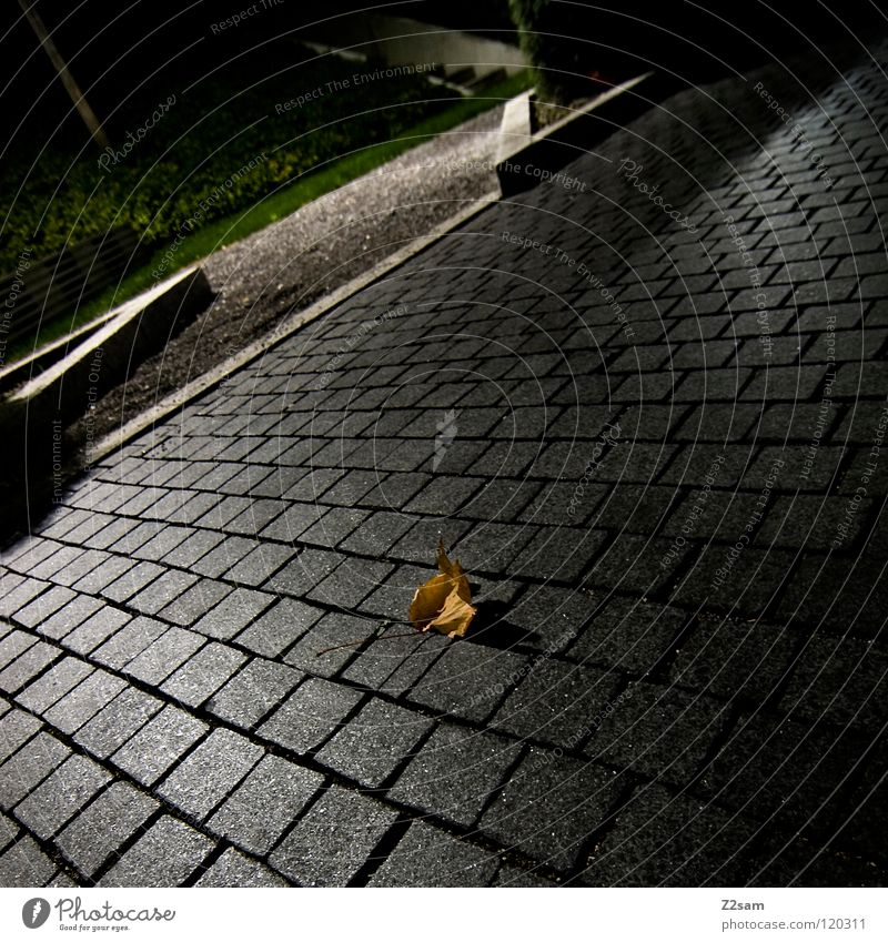 autumn Autumn Leaf Graphic Simple Glittering Green Park Curbside Corner Gray Brown Dark Night Rest Nature Stone Cobblestones Shadow Black & white photo Evening