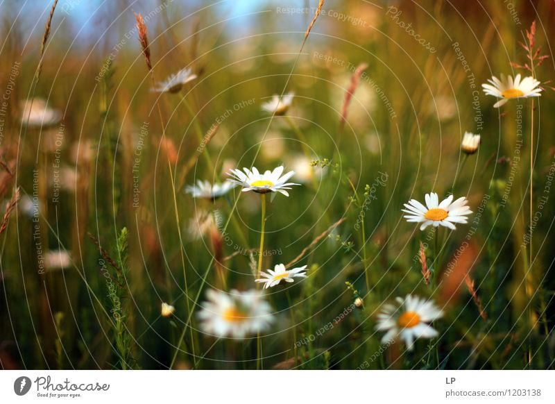 daisies Environment Nature Landscape Plant Elements Air Spring Summer Flower Grass Leaf Wild plant Daisy Garden Park Meadow Field Blossoming Fresh Multicoloured