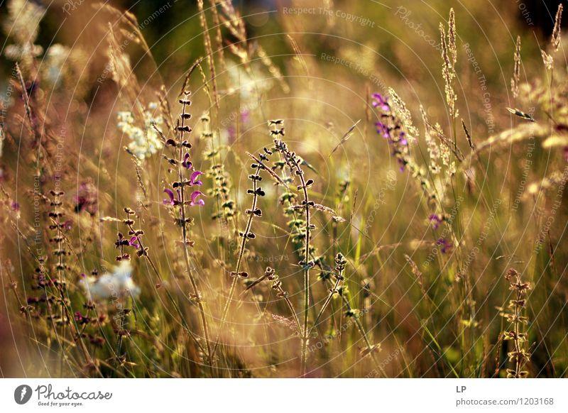 purple herbs Nature Plant Beautiful Summer Flower Landscape Leaf Calm Joy Environment Life Warmth Spring Blossom Emotions Autumn