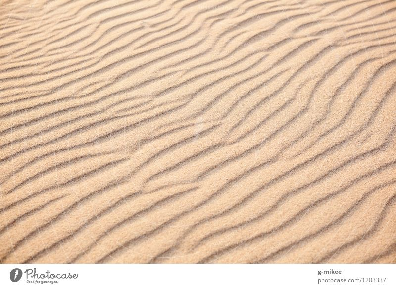 sand Earth Sand Beach Desert Warmth Yellow Gold Structures and shapes Tracks Colour photo Exterior shot Deserted Day Deep depth of field