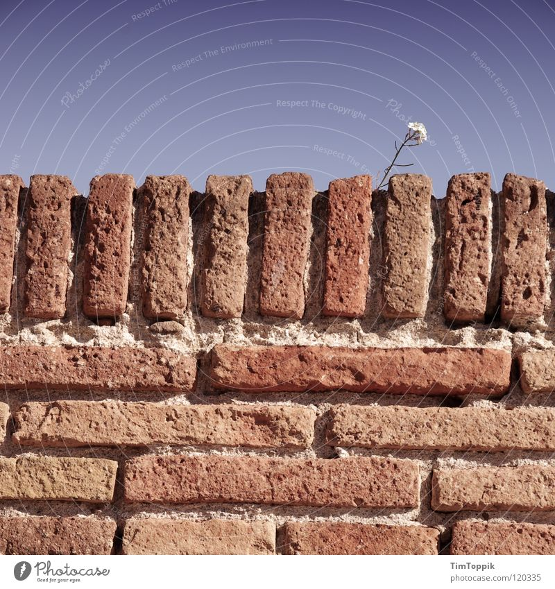 Sky Blue Plant Flower Loneliness Wall (building) Stone Wall (barrier) Horizon Hope Brick Delicate Barrier Seam Block Close