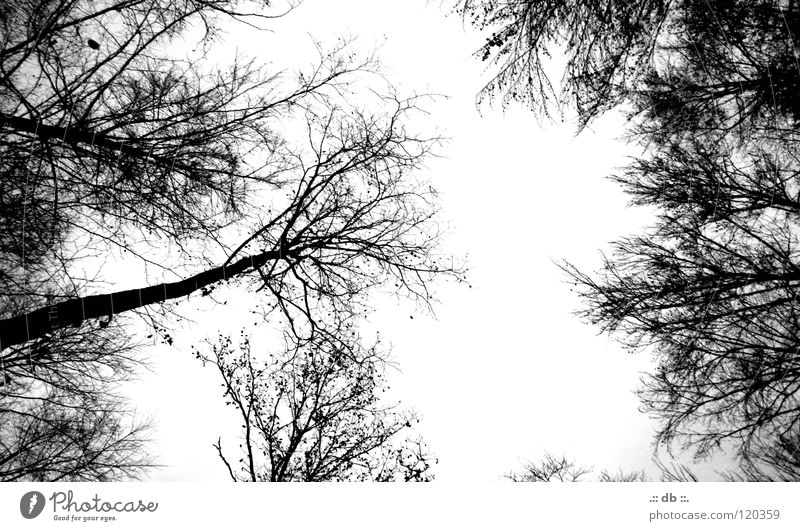 .:: HERBST ::. Autumn Winter Betrothal Forest Tree Clearing Black & white photo To go for a walk