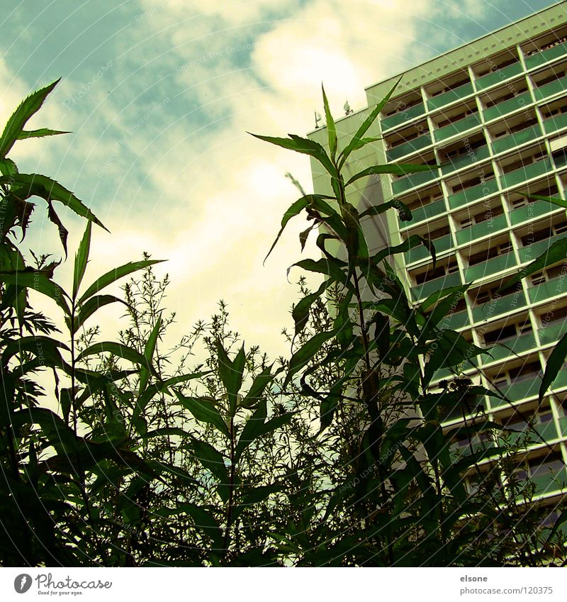 Plant Summer House (Residential Structure) Clouds Life Sleep Bushes Living or residing Dresden Hotel Balcony Prefab construction