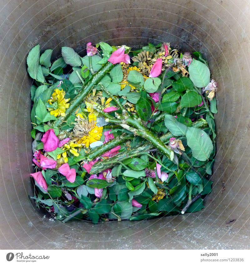 View into the garden bio bin... Plant Flower Rose Old Fragrance Faded Throw Broken Green Nature Divide Decline Transience Decompose organic waste bin Trash