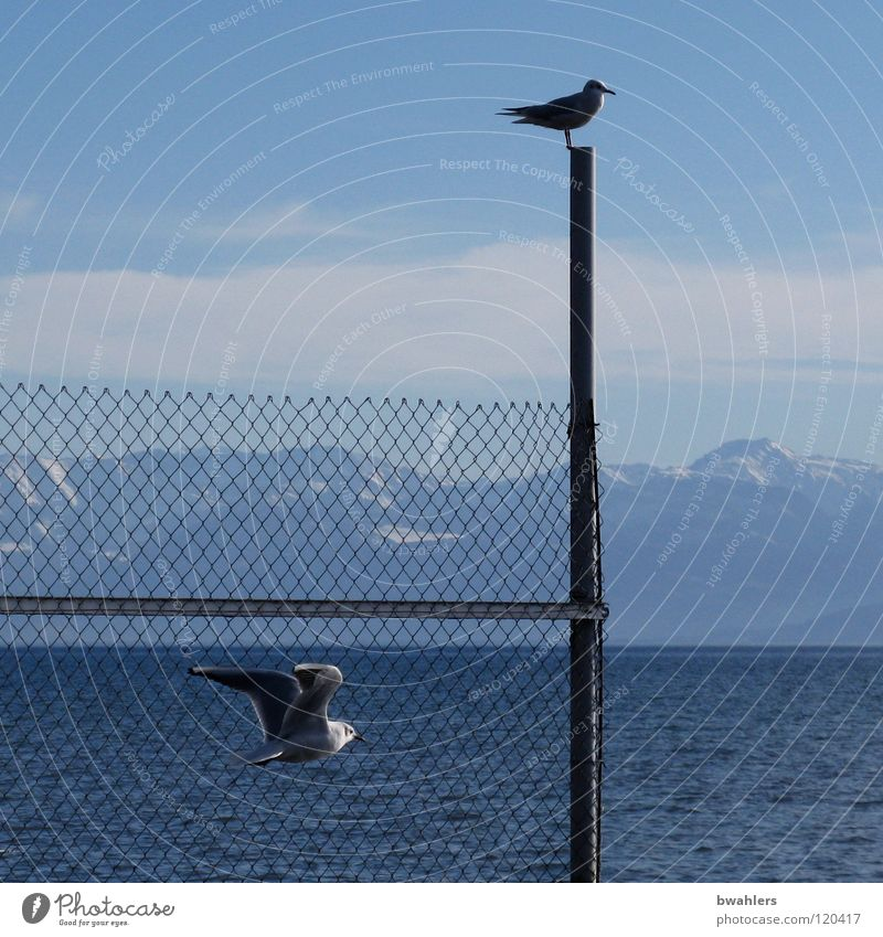 Water Sky Blue Clouds Mountain Lake Bird Waves Flying Alps Fence Seagull Pole Lake Constance