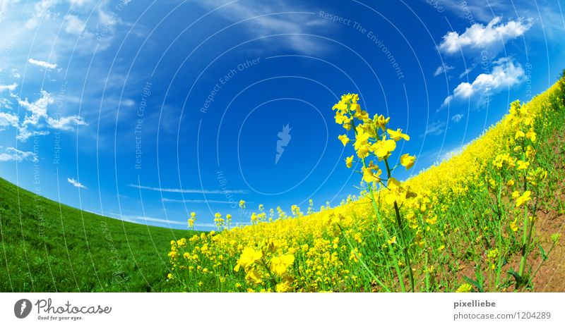 Sky Nature Plant Summer Sun Relaxation Flower Landscape Clouds Spring Blossom Meadow Natural Garden Field Trip