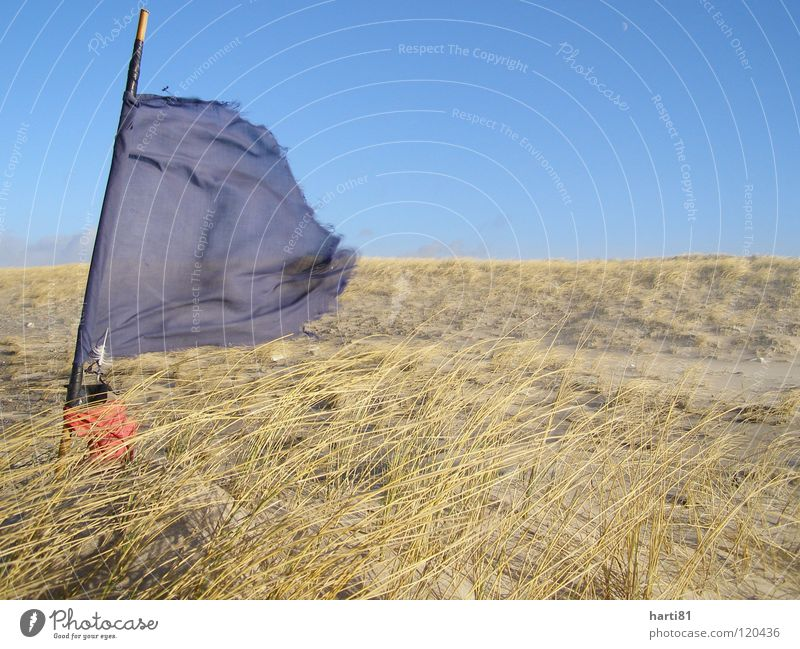 Storm at the beach Beach Winter Flag Fish trap Ocean Vacation & Travel Denmark Beach dune Plant Sand Blue Sky Wind