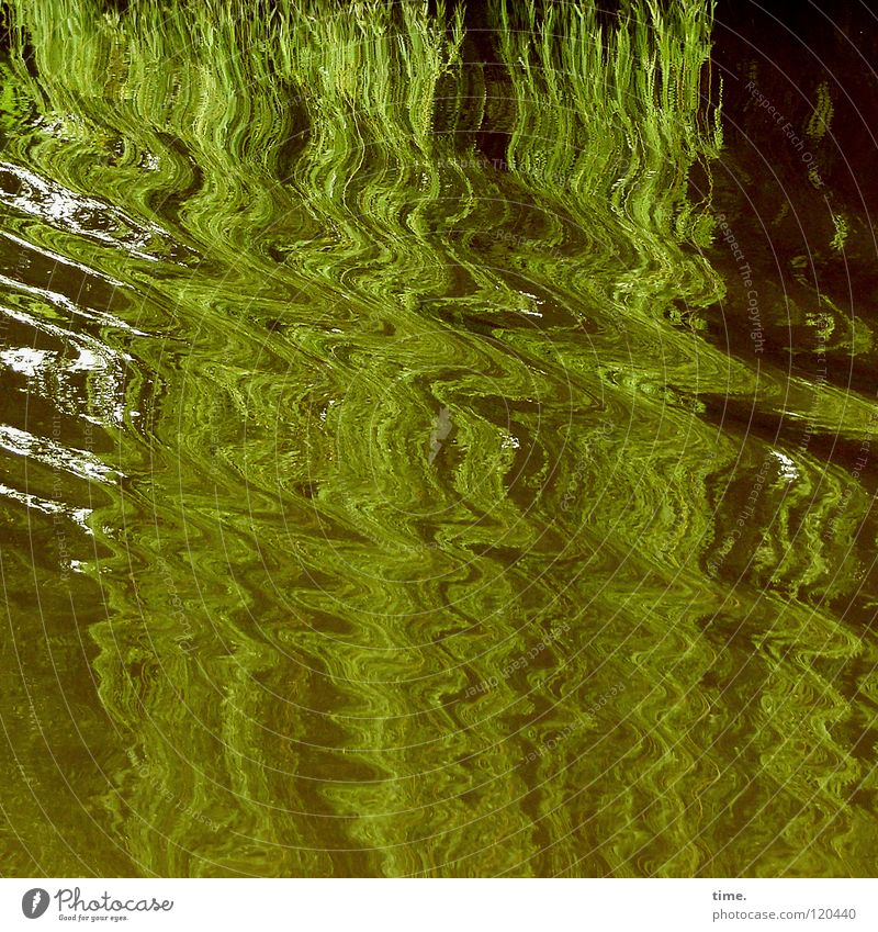 Water Tree Green Movement Waves Transience Dynamics Hang Glide Boating trip Weeping willow