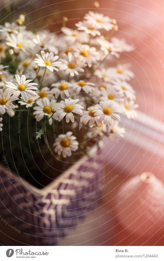 Car Window Garden Blossoming Still Life Marguerite Vase Windowsill