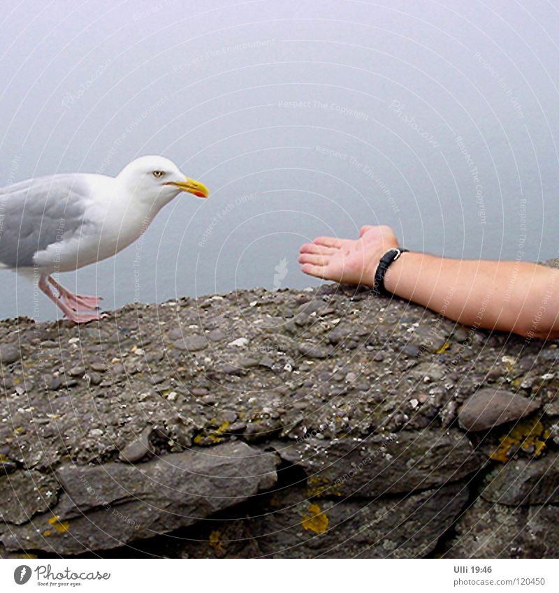 Shall I? No, I don't think so. Vacation & Travel Ocean Arm Hand 1 Human being Animal Bird Seagull Feeding Curiosity Brave Trust Caution Appetite Timidity