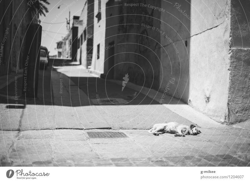 dog tired Port City Animal Pet Dog 1 Sleep Break Siesta Sun Shadow Warmth Street Old town Alley Black & white photo Exterior shot Deserted Day