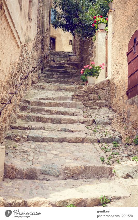 Mediterranean Ways Village Old town Architecture Stairs Yellow Corsica Island Alley Travel photography Flower Lanes & trails Colour photo Exterior shot Deserted