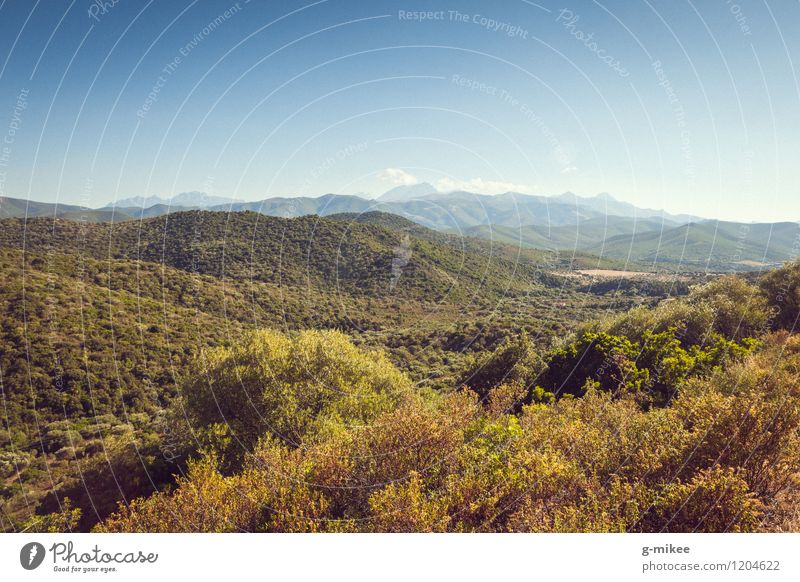 Corsica Nature Landscape Sky Summer Forest Hill Vacation & Travel Large Infinity Warmth Blue Green Mediterranean Island Colour photo Exterior shot Deserted