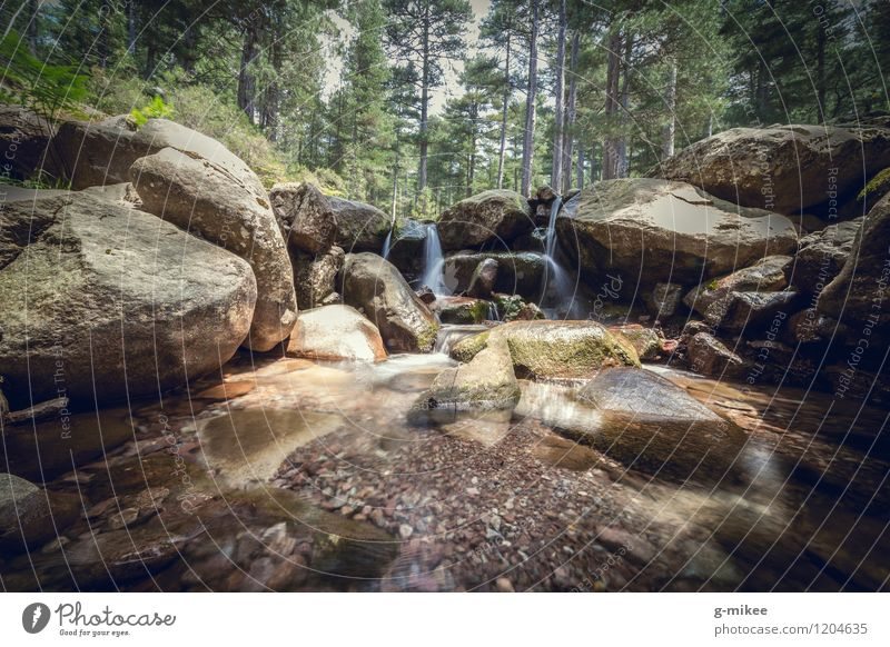 mountain stream Landscape Water Forest Mountain Brook Clean Calm gr20 Hiking Corsica Cold Still Life Flow Nature Colour photo Exterior shot Deserted Day