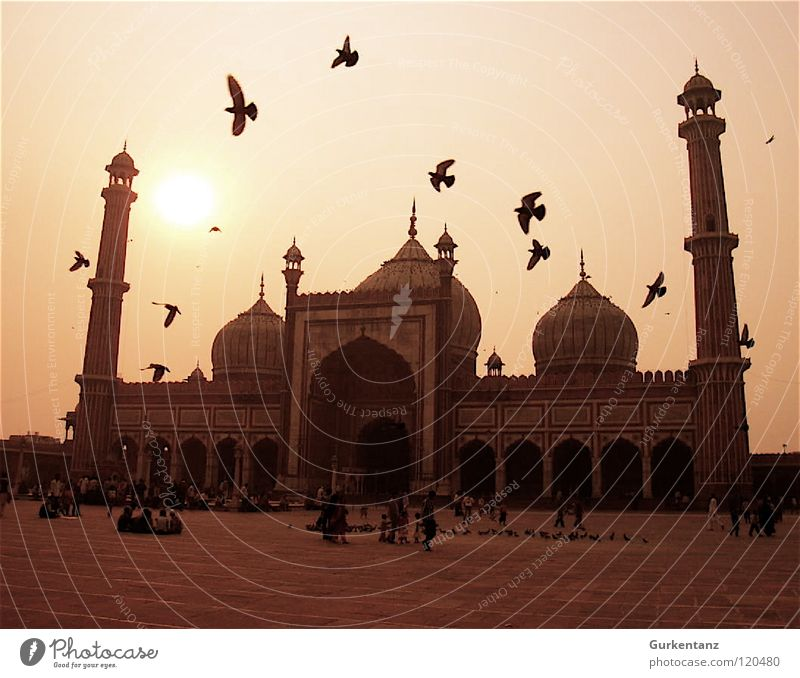Pigeons of Allah Mosque India Back-light Delhi Bird Afternoon New Delhi Islam Flock of birds Religion and faith Asia House of worship Traffic infrastructure