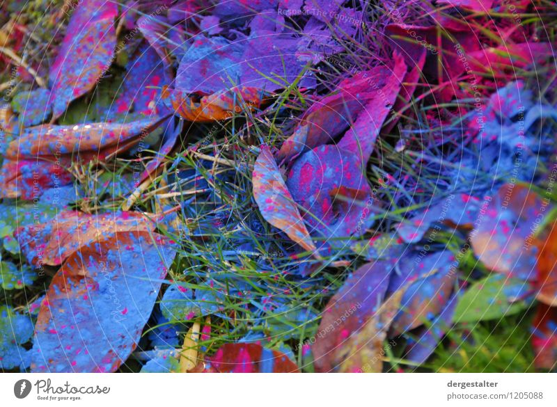 Toner spill Print media Environment Plant Grass Garden Packaging Plastic Sign Work and employment Cleaning Sadness Faded Threat Blue Multicoloured Green Violet