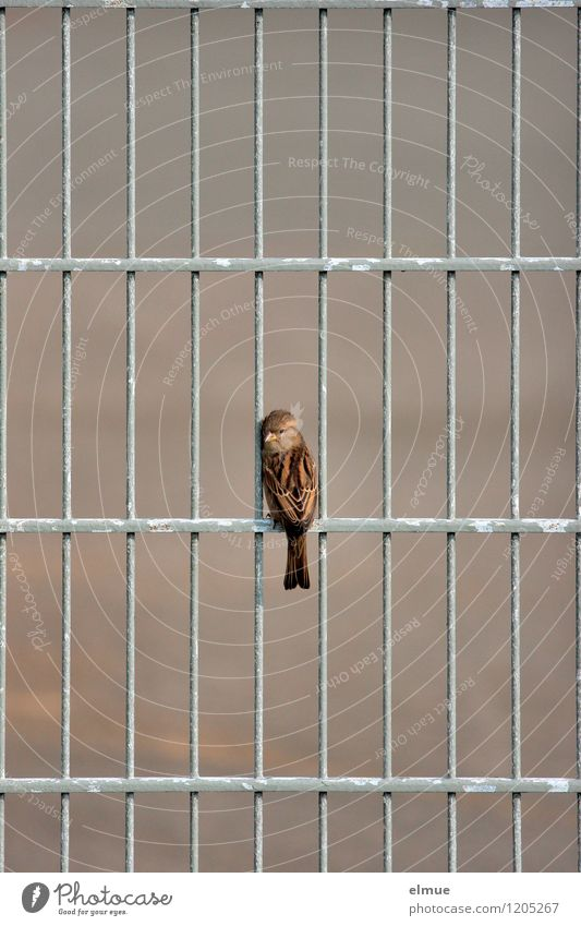 Lock(r)ling Metalware Bird Sparrow Looking Sit Wait Free Curiosity Cute Brown Gray Fear Dangerous Stress Loneliness Discover Expectation Threat Hope