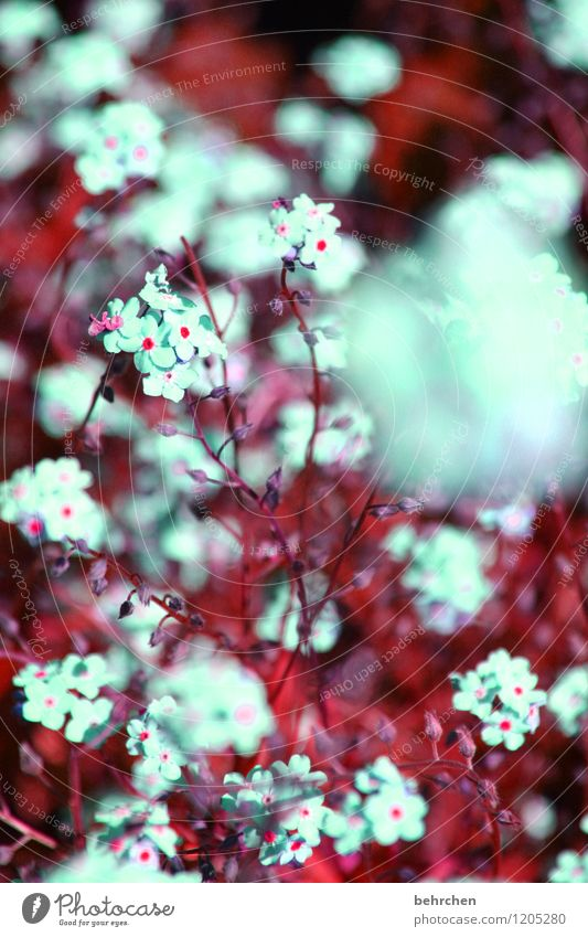 fluffy Nature Plant Spring Summer Beautiful weather Tree Flower Grass Leaf Blossom Forget-me-not Garden Park Meadow Field Blossoming Fragrance Faded Growth