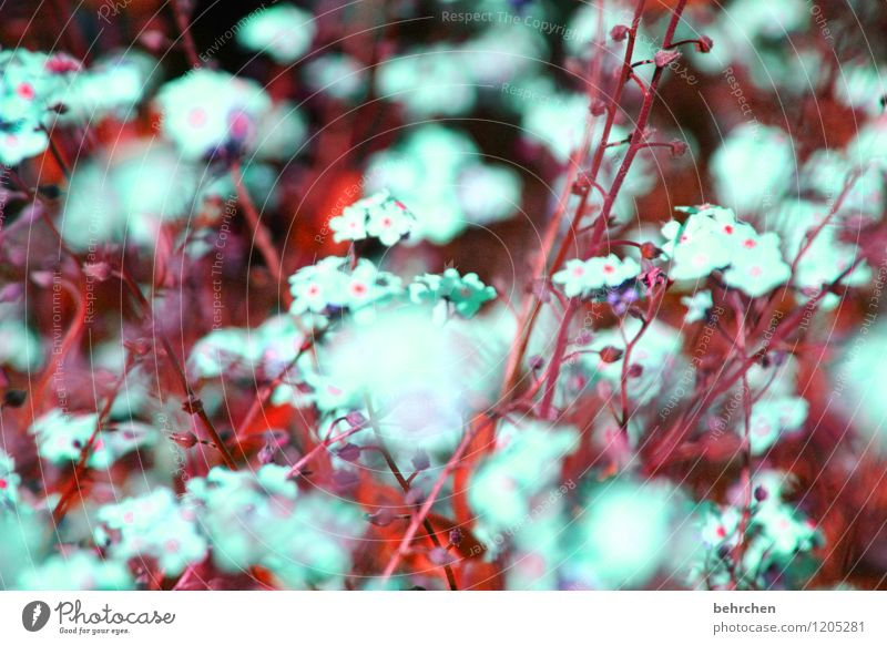 Nature Plant Beautiful Summer Flower Leaf Blossom Spring Meadow Grass Small Garden Park Dream Growth Blossoming