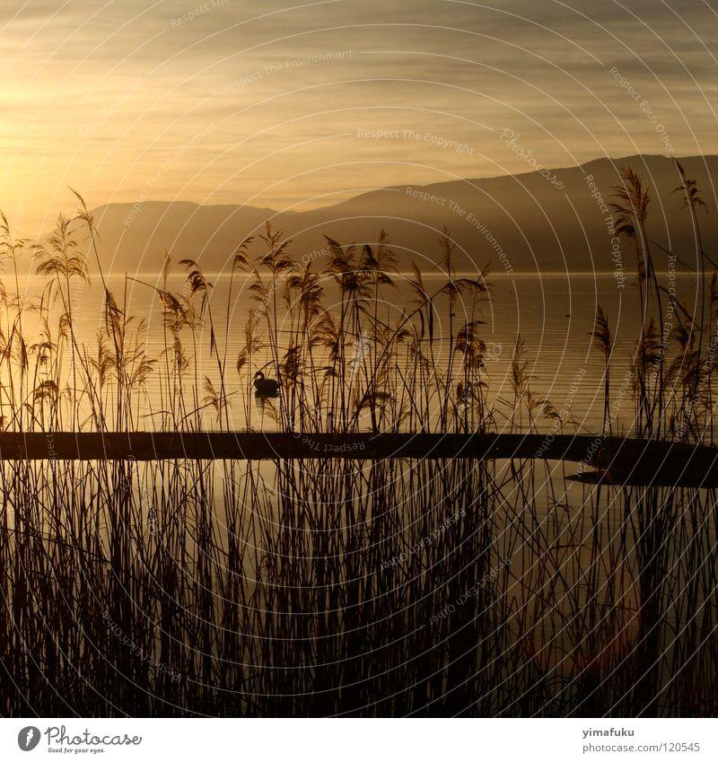 Fanel 2 Sunset Nature lake mountain reed ochre shadow beautiful