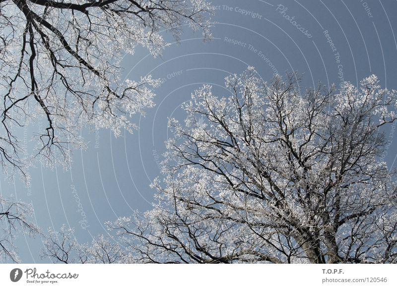 Nature White Tree Winter Cold Snow Ice Together Frost Seasons Treetop Hoar frost Canton Bern