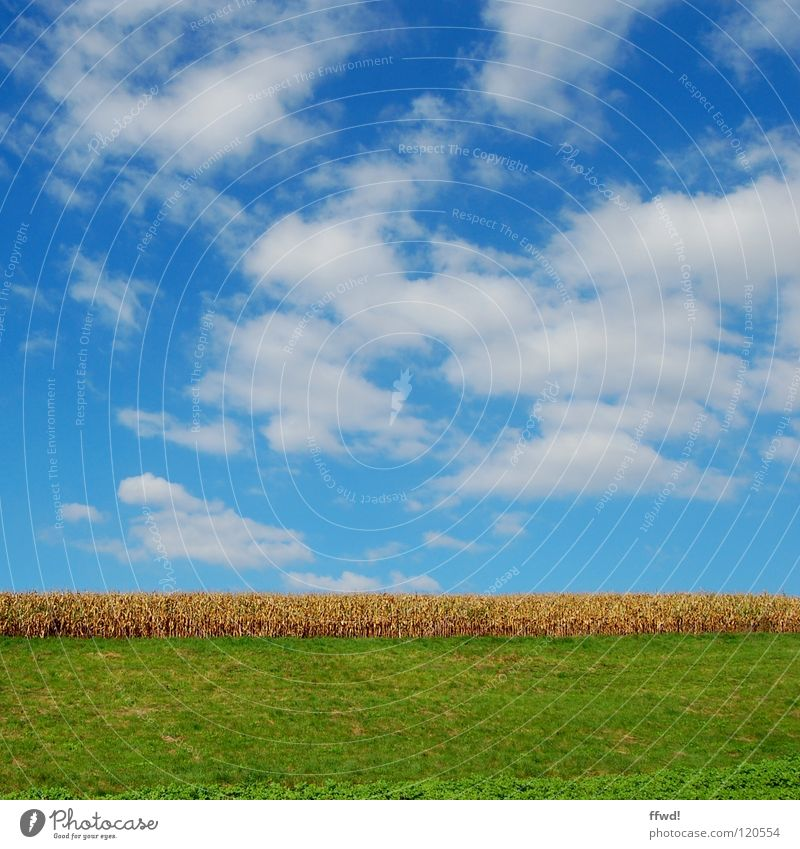 Nature Sky Green Blue Summer Clouds Meadow Landscape Field Growth Grain Agriculture Agriculture Wheat Direct