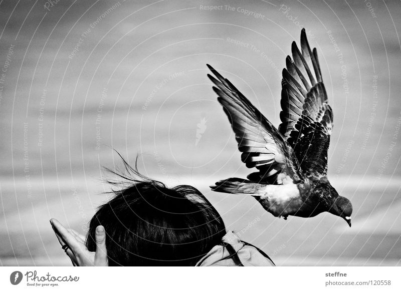 Woman Human being White Black Bird Fear Going Flying Places Black & white photo Aviation Italy Shoulder Tourist Escape Pigeon